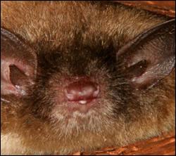 Bat control in Newburg