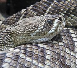 Snake control in Newburg